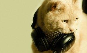 dj-cat