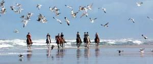 balade cheval plage